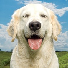 dogs-happiness-frazier_s